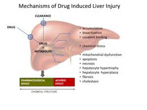 drugs that are metabolized by the liver picture 3