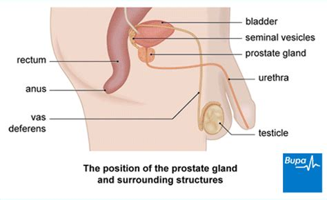 can you get a erection during prostrate check picture 15