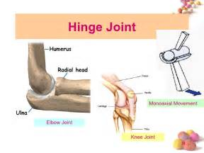 hinge joint picture 5