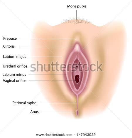 diagram of small penis ina vagina picture 10