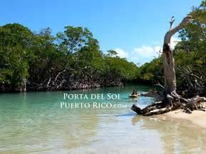 herbal medinine in puerto rico picture 9