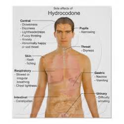 drugs that mimic the effects of hydrocodone picture 13