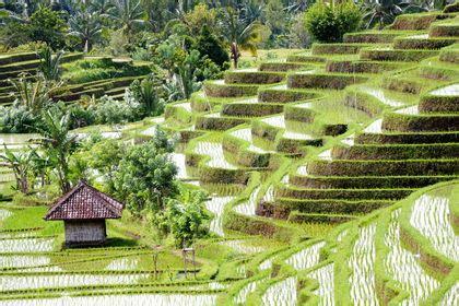 garcinia cambogia for sale gnc picture 10