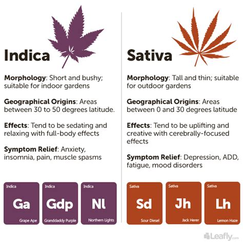 whats the difference between herbal soild smoke and picture 10