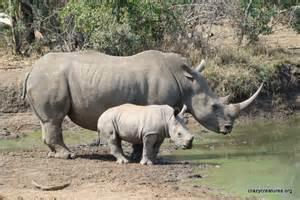white rhino incense picture 7