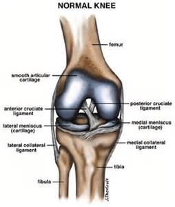 sports - knee joint picture 5