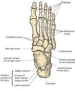 bone and joint specialists picture 7
