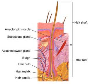 hair follicle removal picture 1