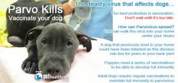 dogs parvovirus intestinal viruses picture 18