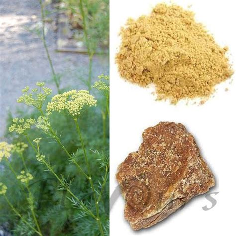 herbs that help your appetite picture 6