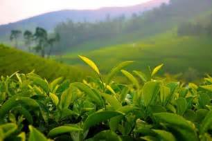 green tea skin care products affiliate program picture 11