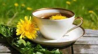 dandelion tea and herpes symptoms picture 7