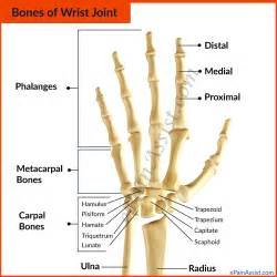 bone and joint pain picture 9