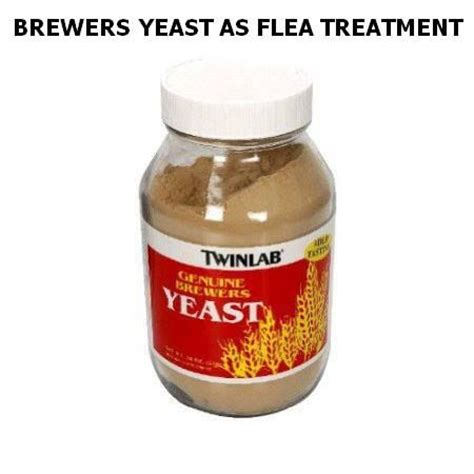 brewer's yeast and fleas picture 1