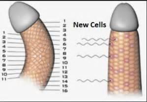 unani treatment for curve penis picture 3