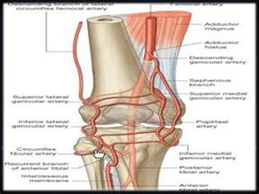 knee joint picture 6