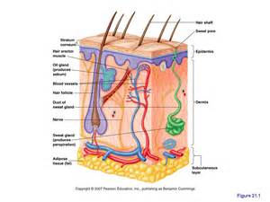 en skin mucosa picture 1