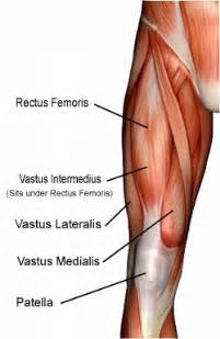 muscle joint pain legs picture 11