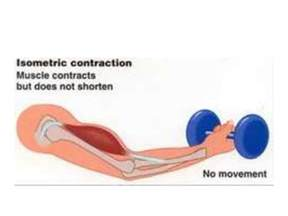 and isotonic muscle contraction picture 10
