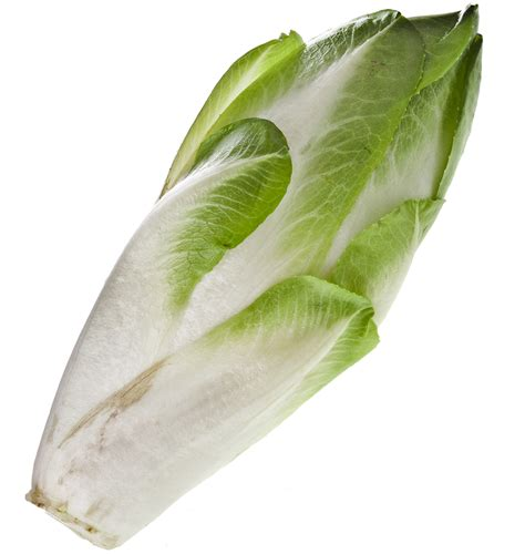 chicory and libido picture 5