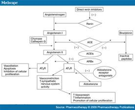 herbal aldosterone blocker picture 6