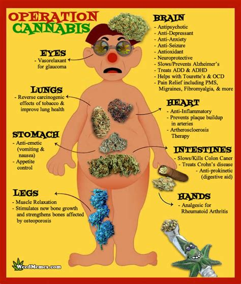 health benefits of dollar weeds picture 5