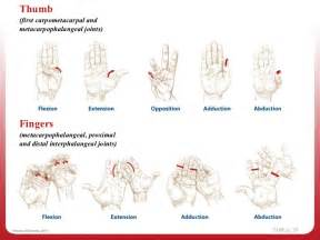 joint movements anatomy picture 18