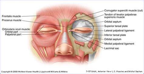 skin anatomy picture 3
