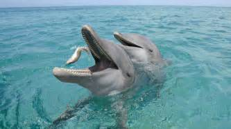 a dolphin's diet picture 6