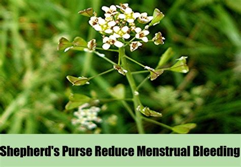 herbal treatment to shorten menstral flow picture 13