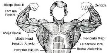 how to build chest muscle after mastectomy picture 14