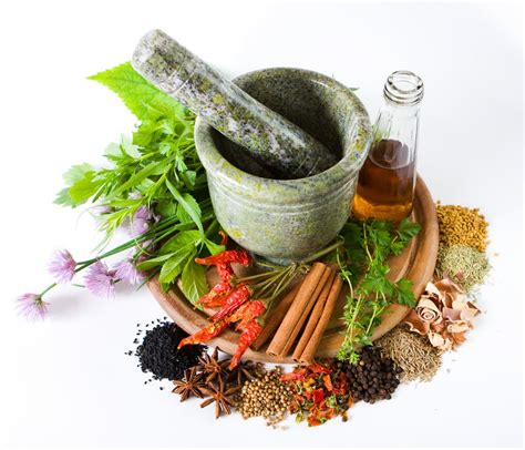 tumbuhan herbal untuk ereksi picture 5