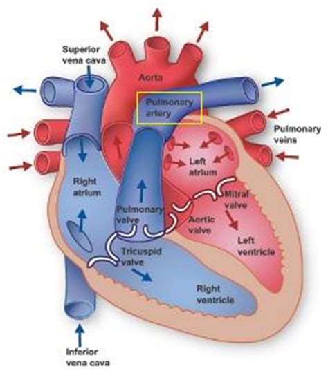Blood flow path picture 6