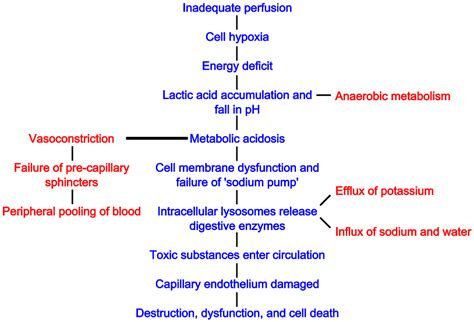 anatomy and physiology of blood circulation picture 9