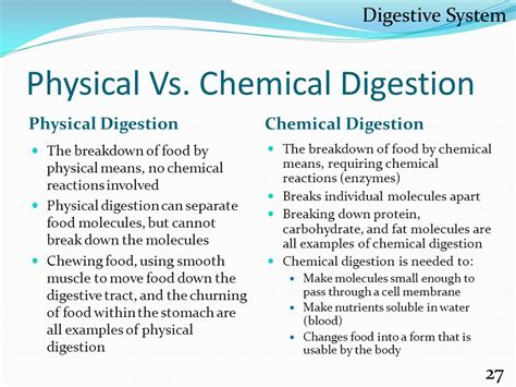 what chemical reaction is involved in digestion picture 13