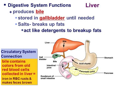 cell salt for liver picture 13