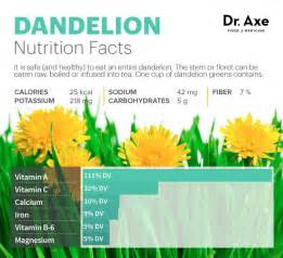 dandelion facts picture 10