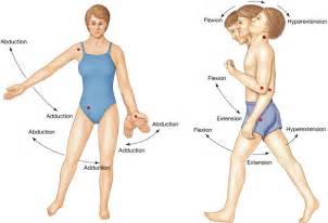 joint flexion rotation anatomy picture 6