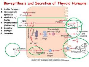 extraction of iodide thyroid cells picture 11