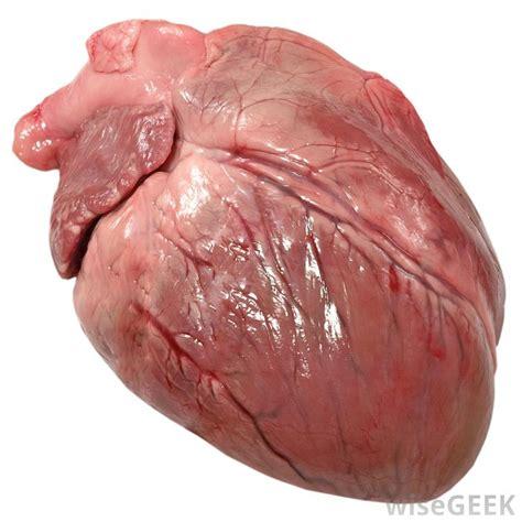 symptoms of acute liver failure in s picture 7