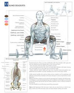 how many sets to build muscle picture 6