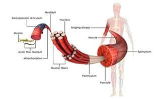 testosterone in vitamins picture 7