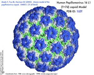 human papillomavirus 66 picture 7