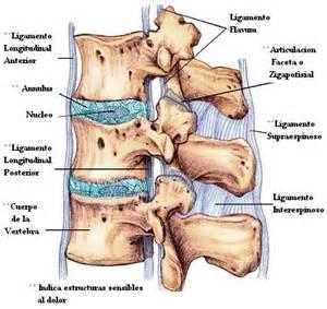 nerve endings el syndrome picture 17