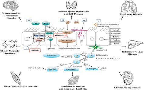 circulation probiotic picture 5