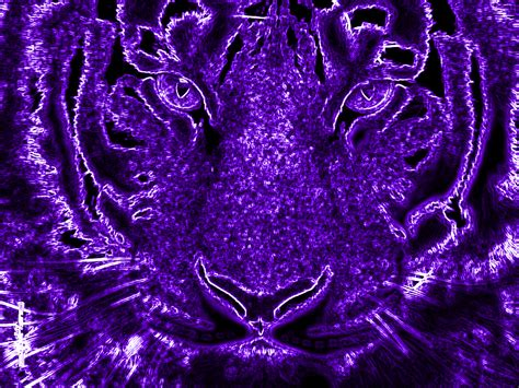 where can you buy purple tiger pills picture 9
