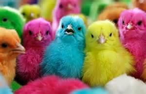 coloured women johaannesburg picture 9