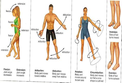joint movements anatomy picture 11