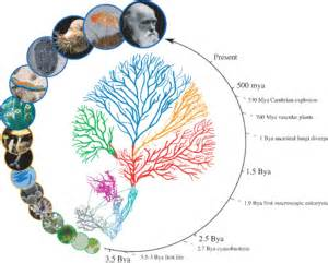 bacterial genomes sequenced picture 3