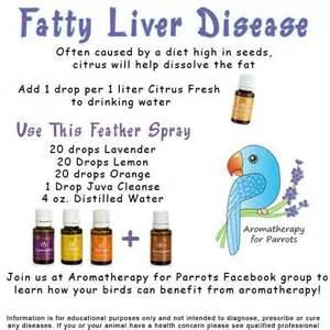 fatty liver essential oil research picture 1